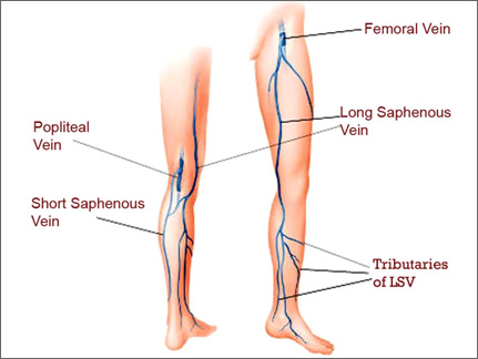 lower leg veins